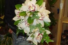 pulm_pruudikimp_orhidee