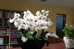 Lauaseade-orhideega-11